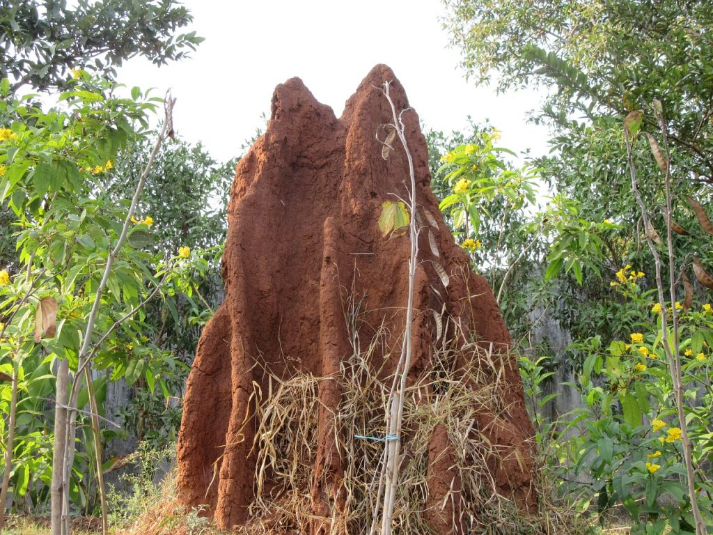 Positive Impacts of Pest Control and Termite Detection